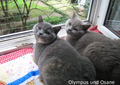Olympus und Osane