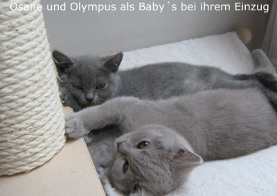 Osane und Olympus