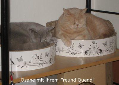 Osane und Quendl1