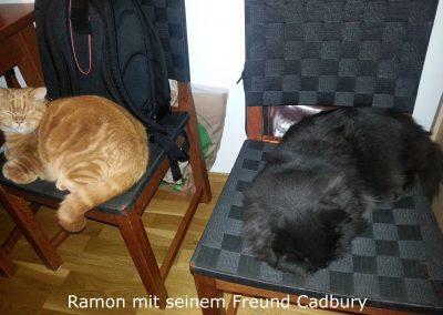 Ramon und Cadbury3