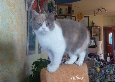 Tiffany 0516