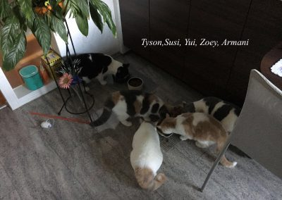 Tyson,Susi,Yui,Zoey,Armani
