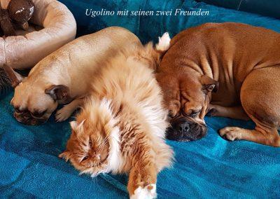 Ugolino mit Hunde
