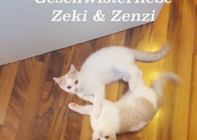 Zeki Zenzi