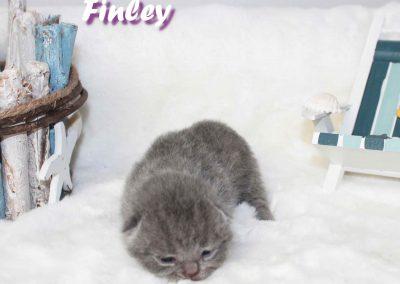 Finley 16.07.