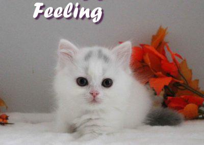 Feeling 29.08 2