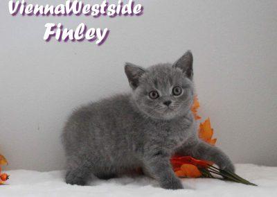 Finley 29.08 1