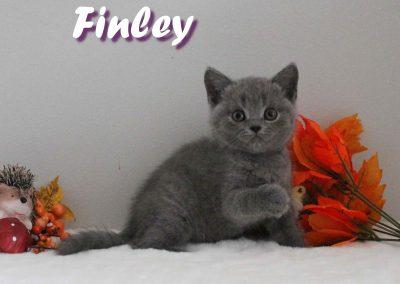 Finley 29.08 3