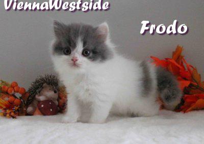 Frodo 29.08 2