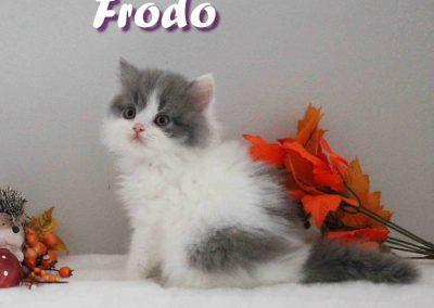 Frodo 29.08